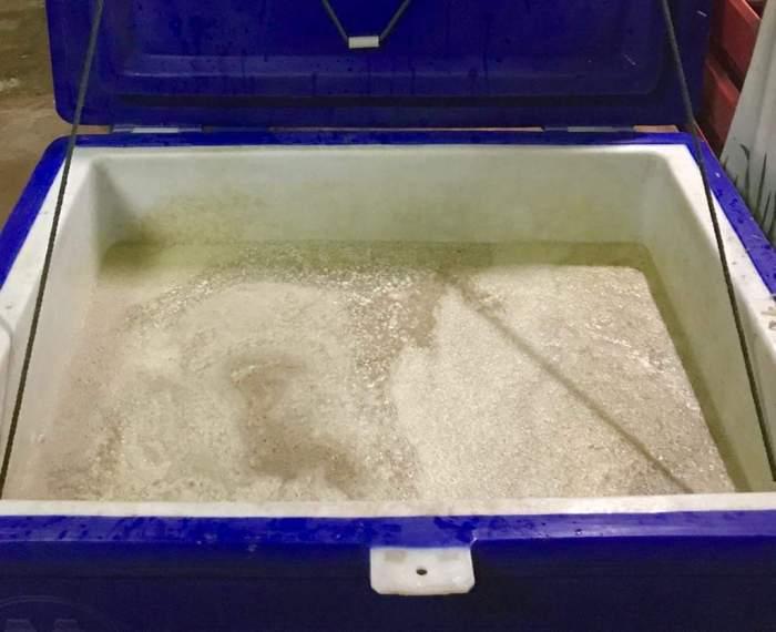 issan rum - fermentation 5